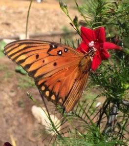 FestivalBeach_Butterfly