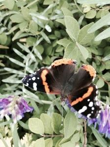 FBCG_Butterflies02_042515