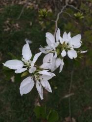 FBCG_Blooming_030716_05